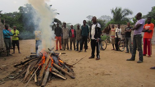 Chiefs watch bonobo bushmeat burn