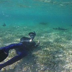 Rafael swimming with sharks in Caye Caulker, Belize