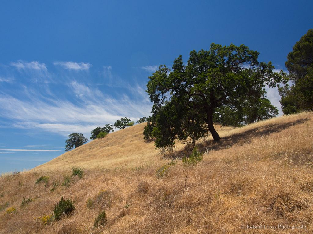 California Golden Oaklands