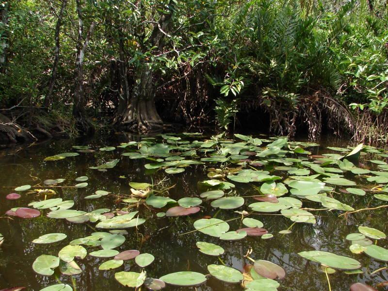 US Miami Everglades 0607 016