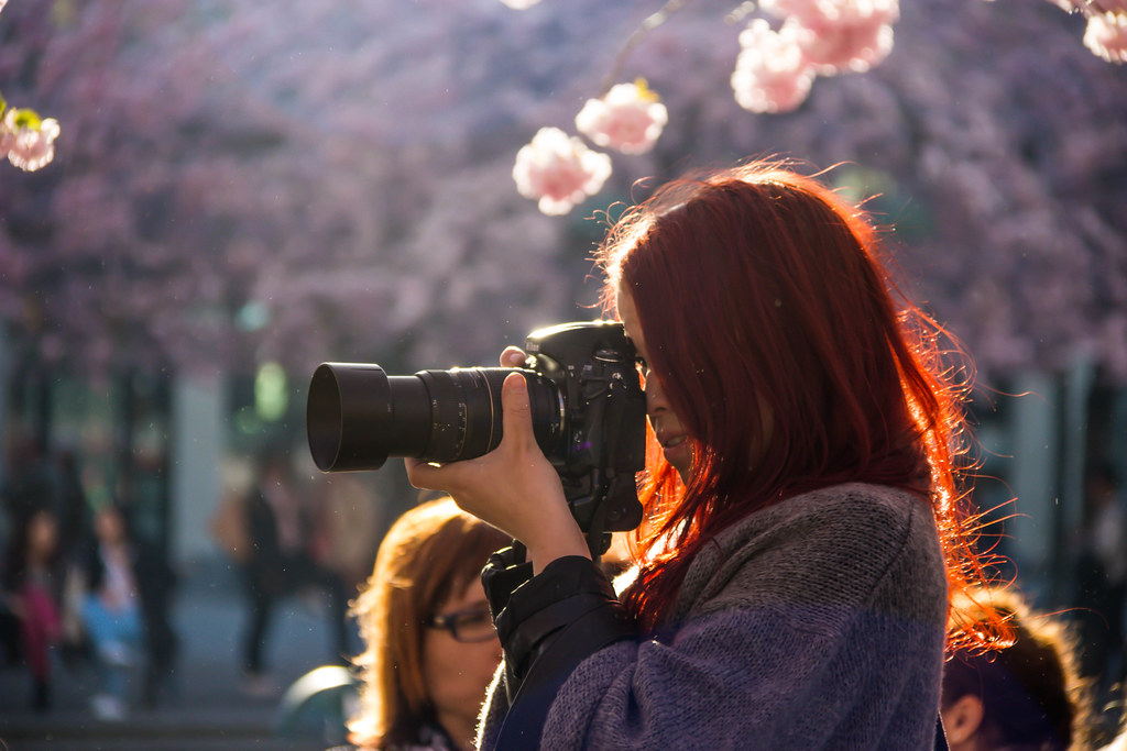Photographing the Cherry Blossoms
