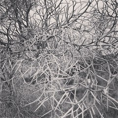 #coachellavalleypreserve #coachellavalley #palmsprings #desertlife #smoketree #blackandwhite #california