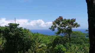 Blick vom Urwald aufs Meer