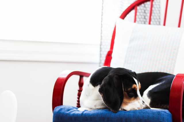 Calvin, Basset Hound, Nursery Dog, maternity photos at home