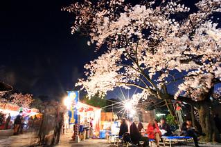 TOKYO sakura さくら