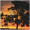 Morning has broken  #sky #sunnydays #skyporn #skies #skywatcher #tree #silhouette #yellow #skylovers