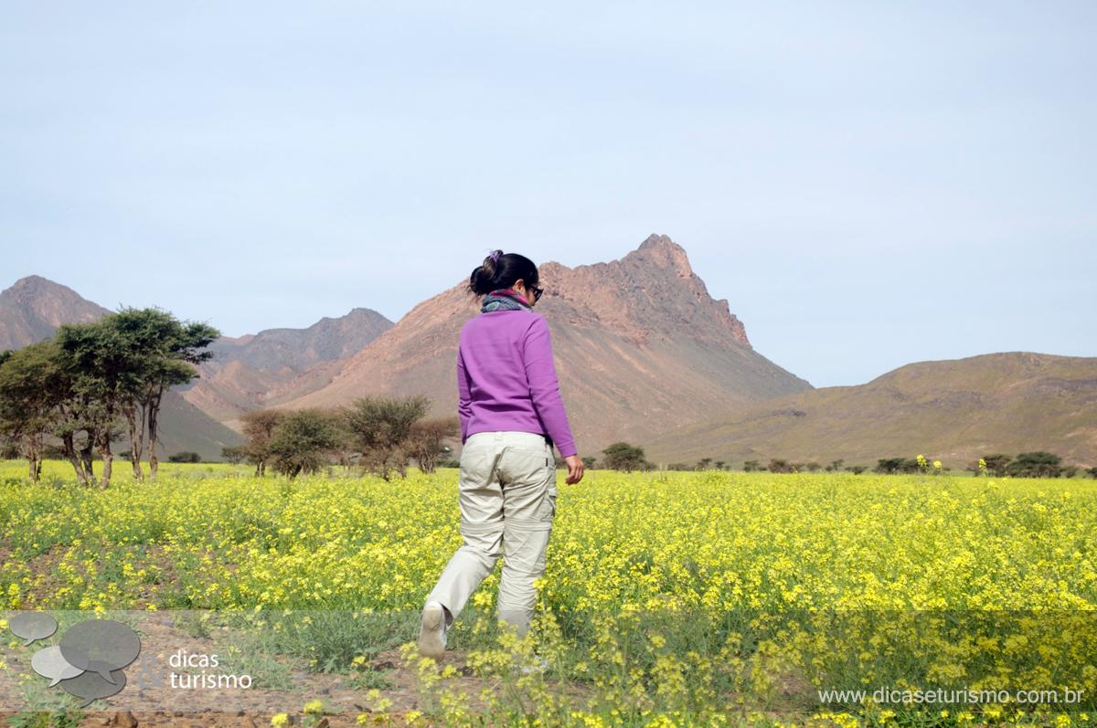 Tour Deserto: Dia 3 - 5