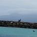 Goélan au Gosier en Guadeloupe