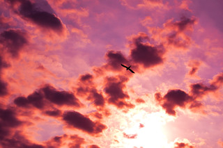 Flying in a pink sunrise.