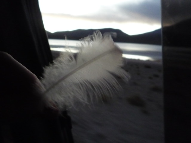 Kurt Found Me a Flamingo Feather