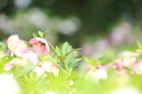 spring garden#2