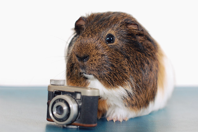 selfie hershey
