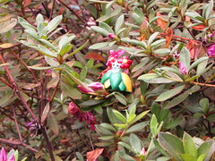 Bellossom and leaves