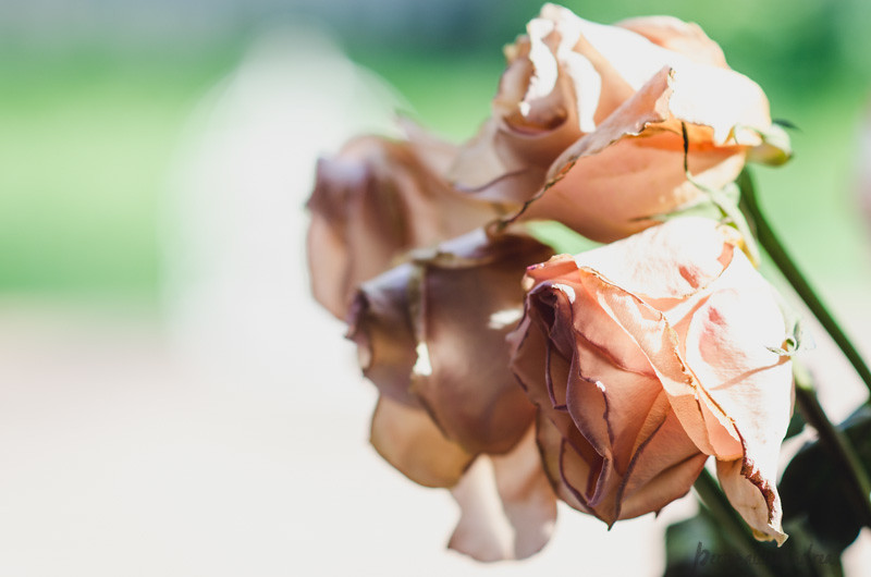 5 Ways to Photograph Flowers // #lovelydeadcrap // Roses