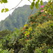 Haiku Gardens Oahu Hawaii