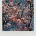 Pink Trees by Joep Polaroid Photography