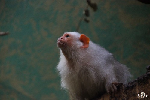 Zoo Bratislava 18.04.20153