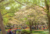 Photo:IMG_0711_713 国営昭和記念公園 渓流広場 HDR By vicjuan