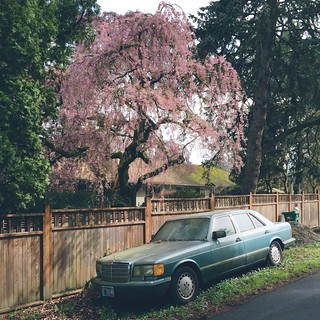 Blossoming tree and fading luxury
