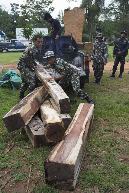 men unloading rosewood logs