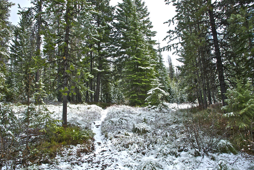 Mt Baldy trail