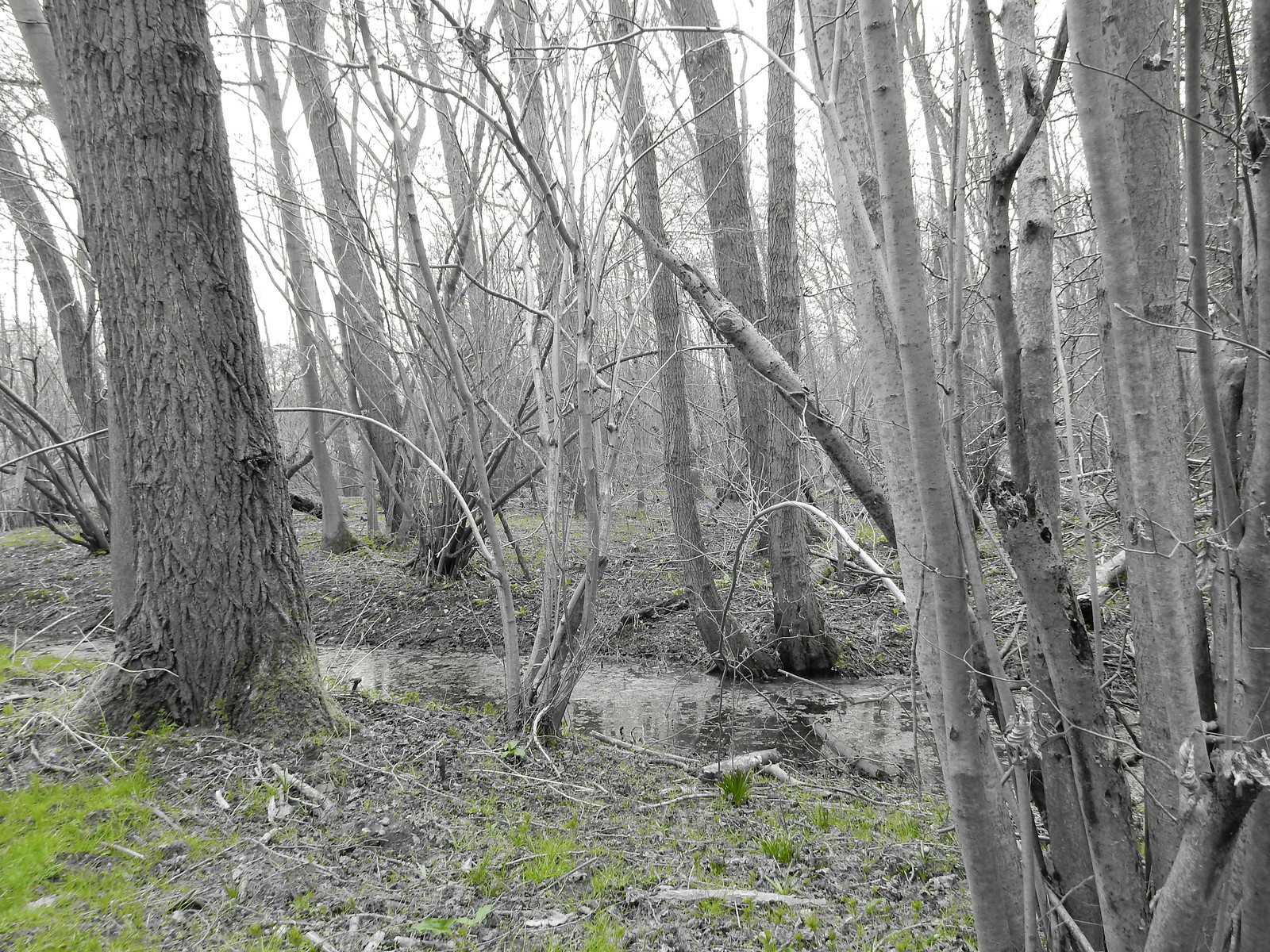 By a stream Sturry Circular (selective colour feature)