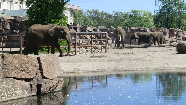 Berlin; Berlin: African Elephants, Tierpark Friedrichsfelde