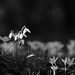 Black & white by Oape