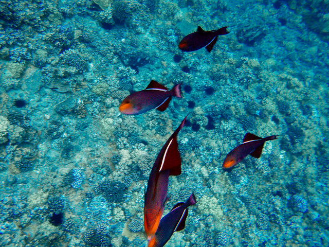 Melody Mak Maui  Snorkeling-1020324