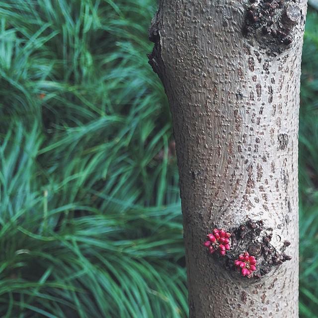 #紫荆#花#bauhinia#redbud#shanghai#上海#vscocam#flower#春#春天#spring