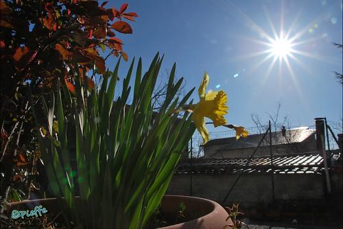 #palazzello #lattarico #calabrumia #vaso #fiore #flower #sun #sole #star #stella