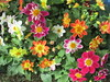 Flowers - Garden show.
