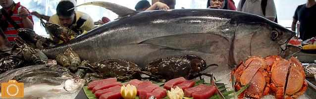 Circles Tuna