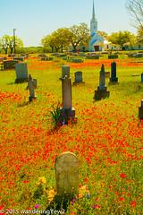 New Berlin Cemetery Wildflowers -- 2015 #2
