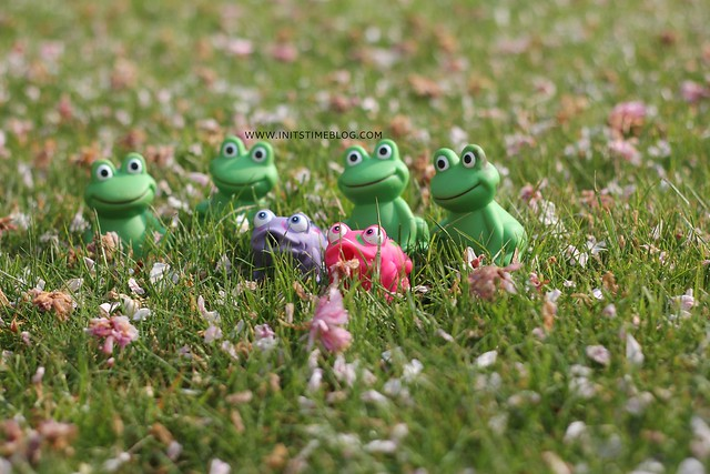 IMG_0102frogs