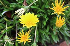 Flores en Azuay