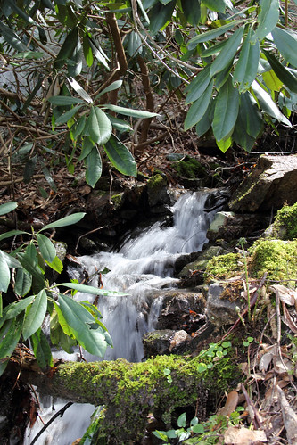 20150418_New_River_Gorge_075