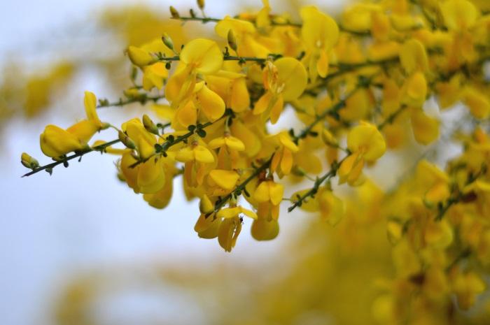 giallo, wildflower girl, fiori, pittarello, benetton, zara (3)