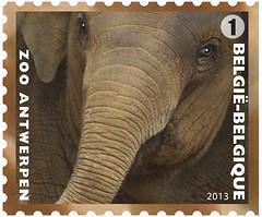 11 Zoo Timbre 2 Elephant
