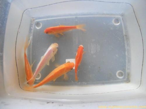 pesci_new