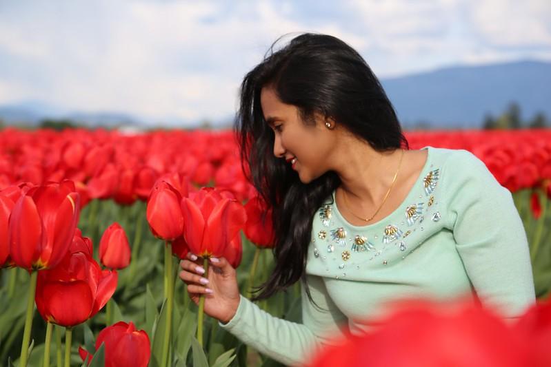 Tulips 210