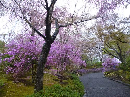 tenruji temple garden 2