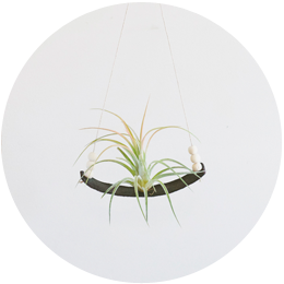 Leather Air Plant Swing