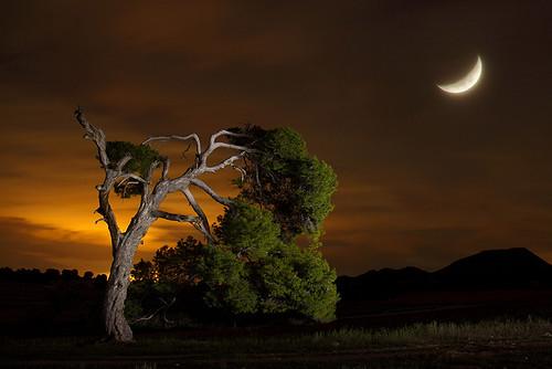 Reverenciando a la luna