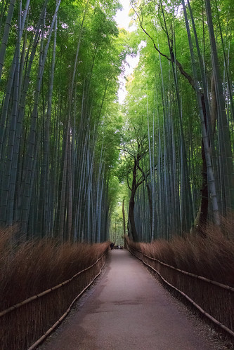 green japan forest kyoto bright straw calm bamboo lovely soothing kyōtoshi kyōtofu