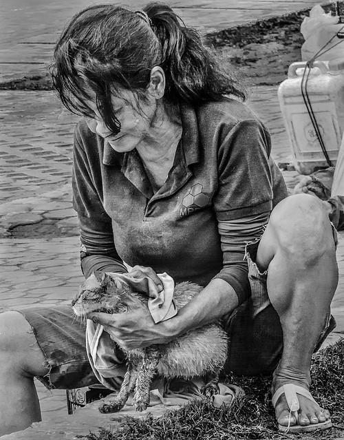 FotoGrazio - Street Cat Wash (free to download)