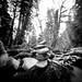 Salmon River 4 by CraftyMoni
