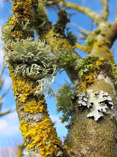 Lots of Lichens (Explored)