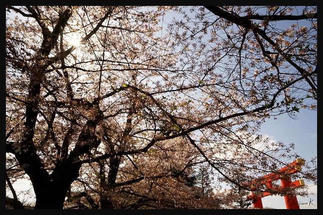 日本京都_東山区 平安神宮.04