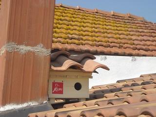Il nido installato nel centro storico di Casamassima falco grillaio lipu